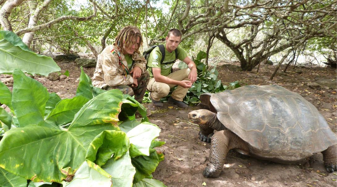 Voluntarios ambientales en las Galápagos alimentando a tortugas gigantes.